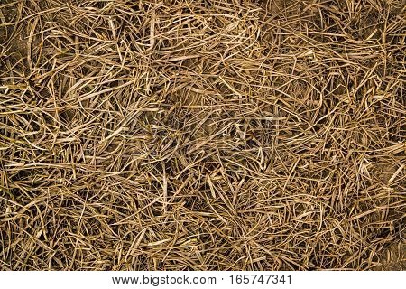 Grass, dry grass and ground, soil, dry grass background