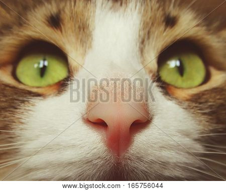 Pink cat's nose animal pet macro smell scent eyes