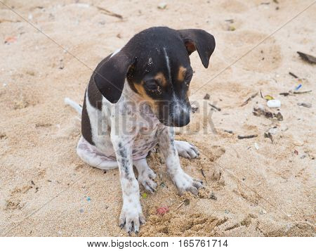 The dirty kid dog sitting on sand beach sadness