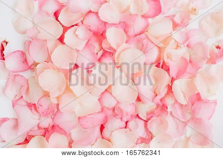 Pink rose petals. Valentine's day background. Flat lay top view
