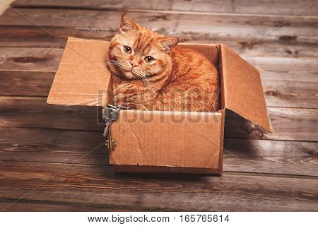 Ginger cat lies in box  on wooden background in a new apartment. Fluffy pet is doing to sleep there. Keys to new home poster