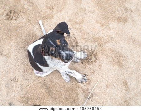 Puppy feeling sad sitting at the beach on sand with dirty body