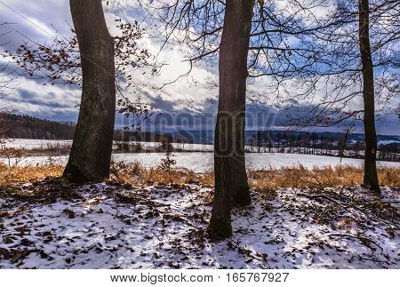 Trunks of trees and snow. Moravian landscape Holesin.