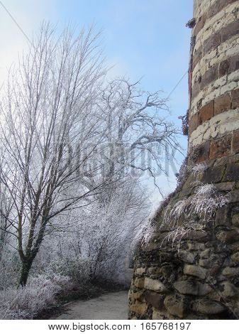 Hoar-frost on trees in the winter in park of Leuven, Belgium1