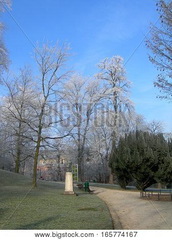 Hoar-frost on trees in the winter in park of Leuven, Belgium4