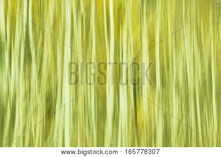 Motion Blurred Trees, Green Abstract Nature Background