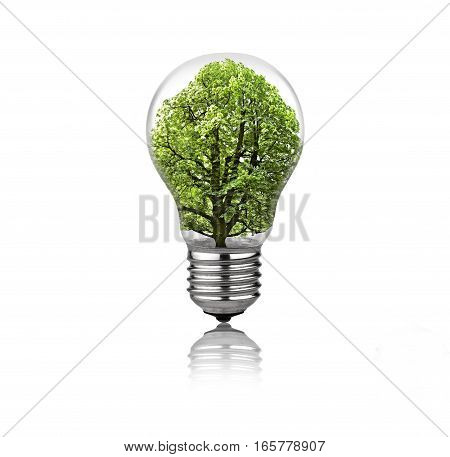 Lightbulb with tree inside isolated on white background