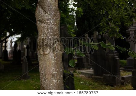 Tree  In Cemetery
