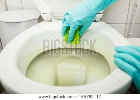 Close-up Of Person Hand Cleaning Toilet At Home Using Sponge