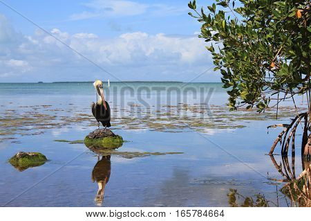 Everglades National Park lake view and pelican in bird sanctuary
