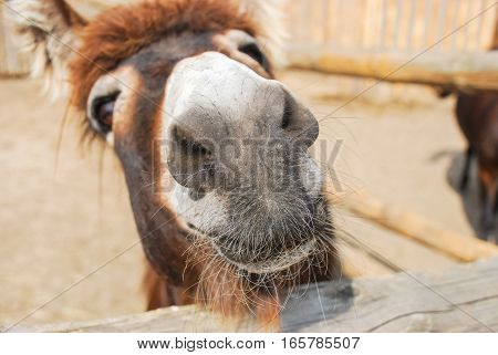 Funny Face Pony Close Up Looking Through Fence