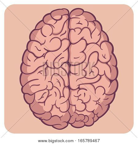 Cartoon style hand drawn layered vector illustration - bright colored naturalistic human brain.
