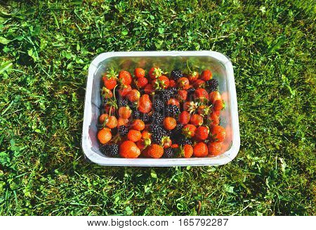 Fresh and organic berries in a plastic bowl - blackberries and strawberries