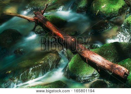 Muir Woods is a state park a few miles north of San Francisco