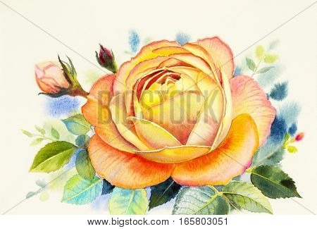 Painting art watercolor flower illustration orange color of rose on white background