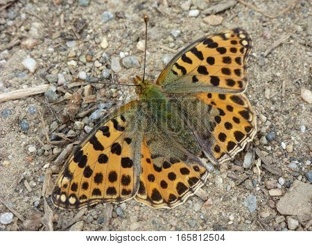 Picture of an orange butterfly sitting on ground