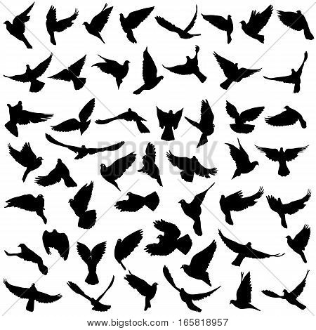 Concept of love or peace. Set silhouettes doves. Vector illustration.