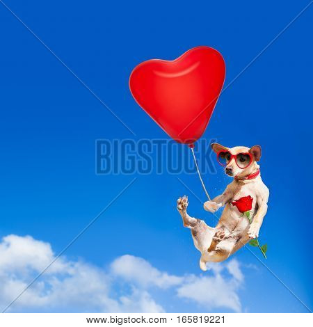 Dog Hanging On Balloon In  Air For Valentines Day