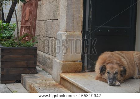 street dog on the steps of a house with metal door