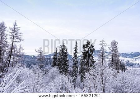 Mountains view with frozen forest and snow at resort town vatra dornei, bucovina, suceava, romania