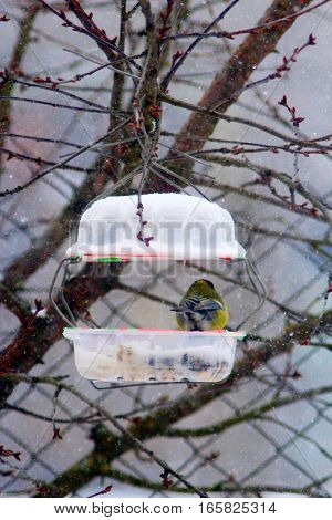 titmouse on the feeding-rack like a small house in the winter