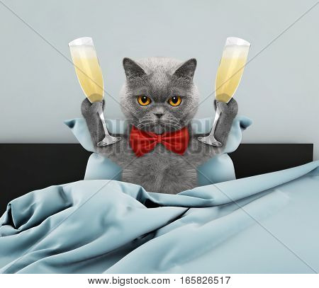 Cute cat laying in bed with champagne