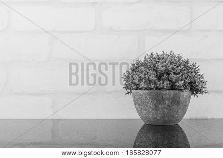 Closeup artificial purple plant on pot for decorate on black glass table and white brick wall textured background in black and white tone with copy space