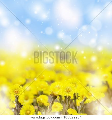 Spring background with flowers mother and stepmother