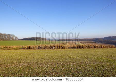 Agricultural Hunting Landscape