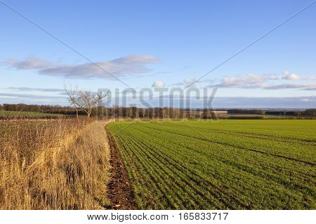 Curving Wheat Field