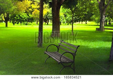 Park bench woods nature landscape trees grass late afternoon