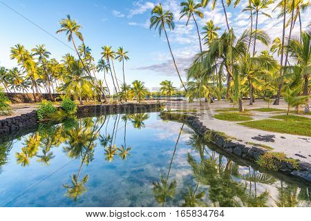 Beautiful landscape of palm trees reflected in the water in Big Island, Hawaii