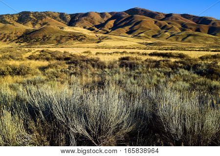 Field including grasslands and sagebrush with mountains beyond taken in the late afternoon sunlight creating many shadows