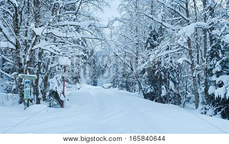 Winter Landscape. Road To The Mountain Hoverla. Frosty Trees Covered By Snow