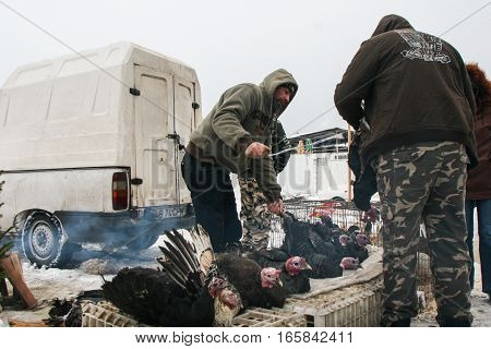 Calugareni Romania December 20 2009: A man is selling turkeys in the animal market in Calugareni. Before Christmas animal breeders are selling and sacrificing their animals in animal markets and vendors are selling different products.