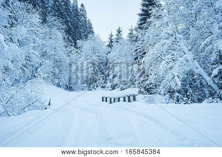 Winter Road After The Snowfall