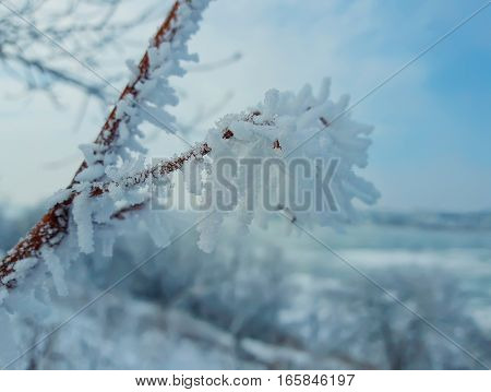 Winter natural background with cherry tree branches in the hoar frost on a snowy white rural background.
