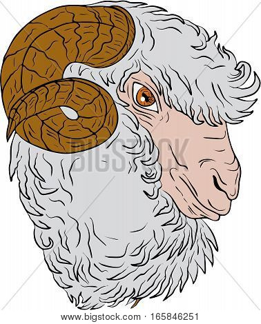 Drawing sketch style illustration of a merino ram sheep head viewed from the side set on isolated white background.