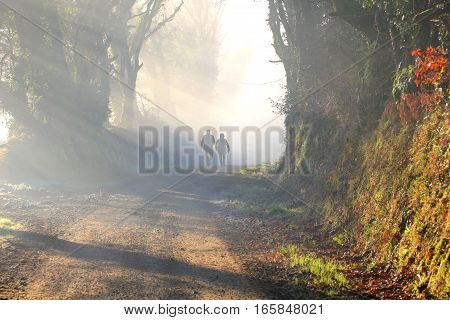 Couple is walking in a foggy forest