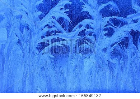 Blue ice flowers on a window pane