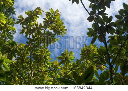 lot of magnolia branches against the blue sky.