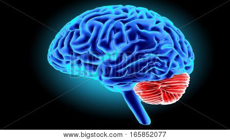 Human brain isolated on dark background. 3D render