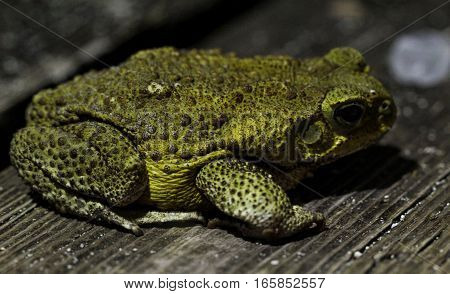 This is a toad in florida usa.