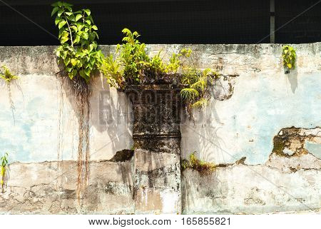 Small tree growing on wall over a window in Geroge Town, Penang