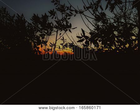 Looking at the sunset through the trees