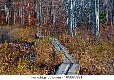 An autumn walk through Acadia National Park