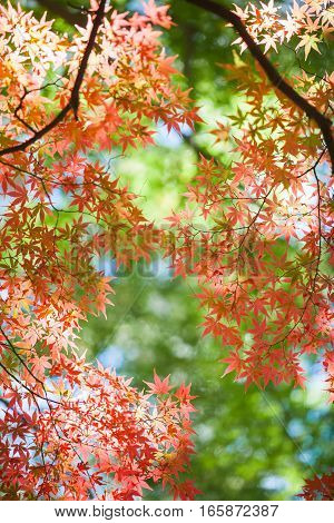Beautiful colorful of autumn leaves in forest
