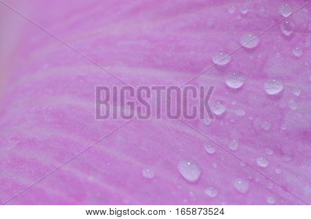 Drop of water and flower background .