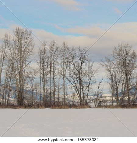 Winter landscape with snow covered field in foreground.  Tall trees and foliage with lake, mountains and blue sky white clouds in background.