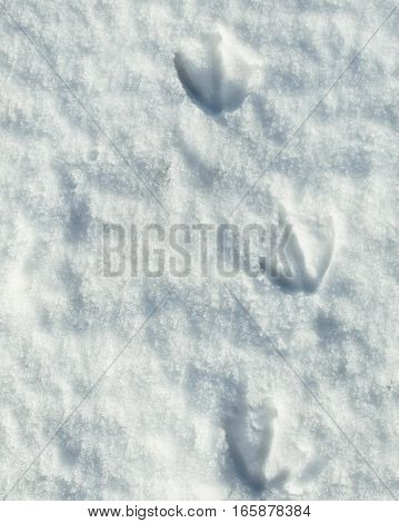 Closeup of bird tracks on snow covered surface.